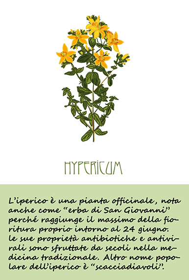 iperico-pianta-officinale